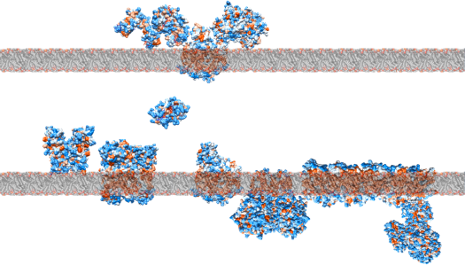 Geobacter, metal reduction, extracellular electron transfer