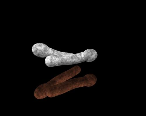 animated bacteria gif
