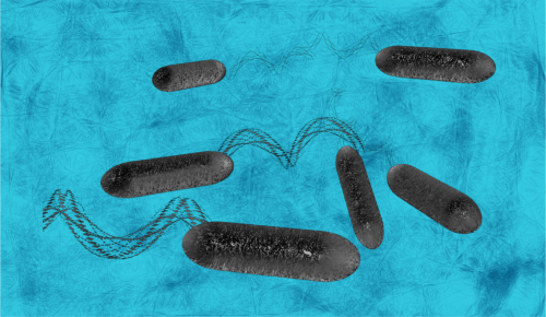 Swimming bacteria
