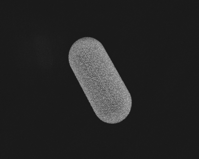 animated bacteria GIF, microbiology, bacteria gif, animated gif