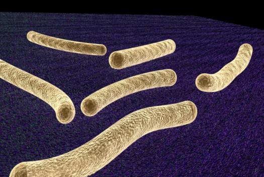 animated bacteria, cellulose, bioenergy