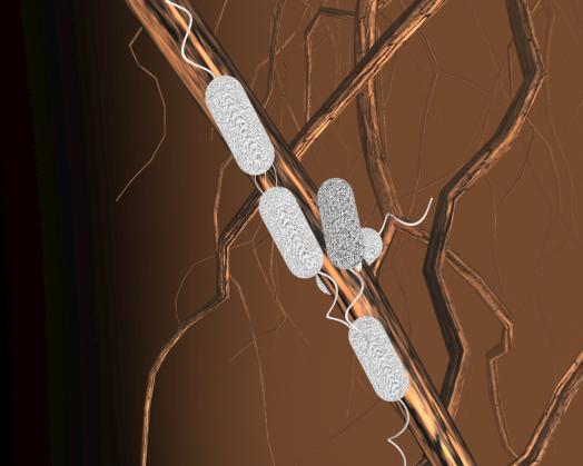 animated bacteria, rhizosphere bacteria