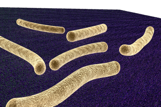 3D bacterial cell illustration, bacteria,