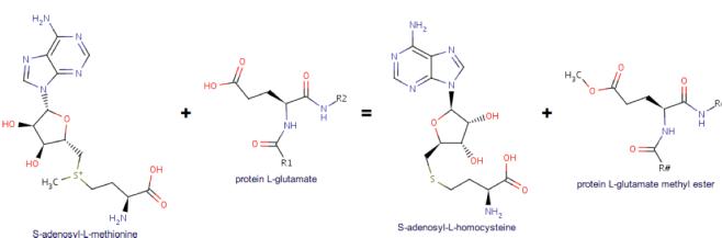 O-methylation reaction